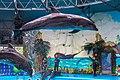 2017-05-16 Show in Kyiv Dolphinarium 04.jpg