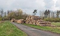 2017 Kłody drewna w Dębowinie.jpg