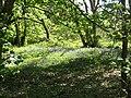 2018-05-05 Blubells, Banvilles Cottage Drive, East Runton (2).JPG