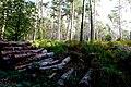 2019-10-05 Hike Forst Leucht. Reader-22.jpg