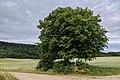2020-06-28 102048 Salzhemmendorf LSG Randbereiche des Ith.jpg
