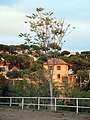 209 Torre Codina (Canyet, Badalona).JPG
