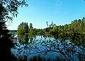 3145. Меднозаводский Разлив озеро.jpg