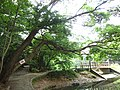 3 Chome-13 Saiwai, Naka-ku, Hamamatsu-shi, Shizuoka-ken 433-8123, Japan - panoramio (1).jpg