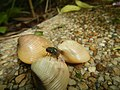 4087Ants Common houseflies foods delicacies of Bulacan 46.jpg