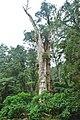 558, Taiwan, 南投縣鹿谷鄉內湖村 - panoramio (29).jpg
