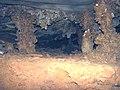 71 Helictites & columns (travertine) 1 (8324761861).jpg