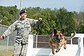 88th Security Force Squadron Working Dog 160914-F-BO631-1039.jpg