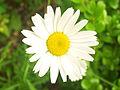 A-flower-for-you.jpg