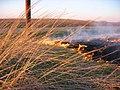 A Burning for Conservation in Southeastern South Dakota (16812651970).jpg