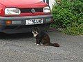 A Hill Street Cat - geograph.org.uk - 1341119.jpg