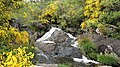 A Pobra do Caramiñal río Pedras 7.jpg