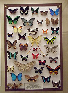 A butterfly collection.jpg