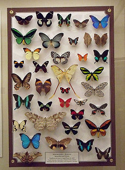 Une collection de papillons