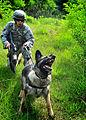 A military dog.jpg