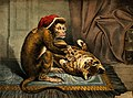 A monkey physician examining a cat patient for fleas. Colour Wellcome V0011066.jpg