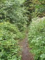 A narrow path in Bute Park, Cardiff - geograph.org.uk - 221676.jpg
