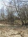 A view of a trail trace at Rock Creek Crossing in Council Grove, KS - 4 (53e6f932b6f745049a6279214fb4e202).JPG