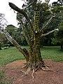 Aburi garden 15.jpg