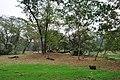 Acharya Jagadish Chandra Bose Indian Botanic Garden - Howrah 2011-02-20 1654.JPG