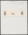 Acrochordus fasciatus - kop - 1837 - Print - Iconographia Zoologica - Special Collections University of Amsterdam - UBA01 IZ11900017.tif