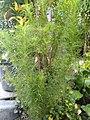 Adas Plant.jpg