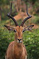 Africa Safari 011 (5282028933).jpg