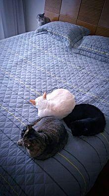 8eade3ea560 Gatos demonstram boas capacidades de socialização entre si