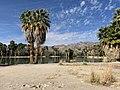 Agua Caliente Regional Park.jpg