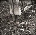 Alabama Plow Girl, near Eutaw, Alabama MET DP212790.jpg