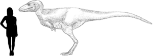 Alectrosaurus - Hypothetical reconstruction of Alectrosaurus. Size based on holotype.