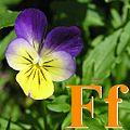 Alfabet roślin - literka F.jpg