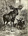 All about animals. Facts, stories and anecdotes (1900) (14591558160).jpg