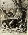 All about animals. Facts, stories and anecdotes (1900) (14591778658).jpg