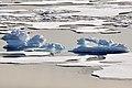 Alligator Ice (4370258427).jpg