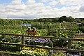 Allotment Gardens, Winchester Street, Botley - geograph.org.uk - 212797.jpg