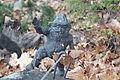 Alpinki (Alpinists) Wroclaw dwarf 06.JPG