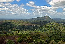 Surinam-Klimat och miljö-Amazon jungle from above