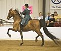 American Saddlebred13.jpg
