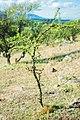 Among Strongest Trees (184056835).jpeg