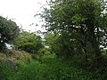 An overgrown section of the Llanfigael Green Lane - geograph.org.uk - 1287023.jpg