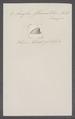 Ancylus fluviatilis - - Print - Iconographia Zoologica - Special Collections University of Amsterdam - UBAINV0274 088 03 0004.tif