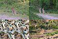 Animals at Hoge Erf Schaarsbergen, very often visible when walking - panoramio.jpg