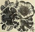 Annual descriptive catalogue 1895 - seeds (1895) (18427845051).jpg