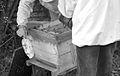 Apiculteurs - Installant du sirop sur un nourisseur - 4.jpg