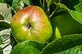 Apple NZ7 0227 (50176013438).jpg