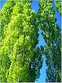 April Parc Natural Freiburg Germany - Master Landscape Rhine Valley Photography 2014 Landgut Mundenhof - panoramio (49).jpg