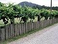 ArcozeloPTL Stone fence.jpg