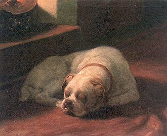 Bulldog - Painting of a Bulldog by Arthur Heyer (1872–1931).