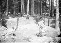 Artilleriestellung im Hartwald - CH-BAR - 3237621.tif